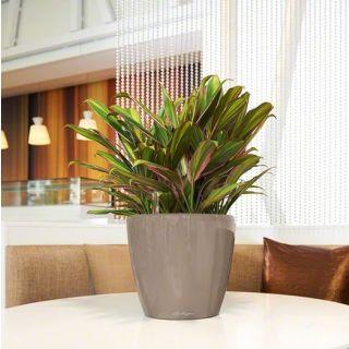 Vaso da tavolo CLASSICO PREMIUM Ø28 LS con auto irrigazione - LECHUZA