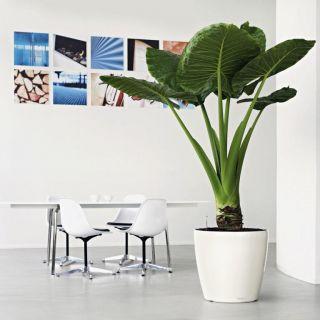 Vaso per piante CLASSICO PREMIUM LS Ø50 H47 con auto irrigazione - LECHUZA