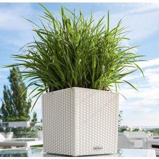 Vaso fioriera CUBE COTTAGE 30x30 H30 con auto irrigazione - LECHUZA