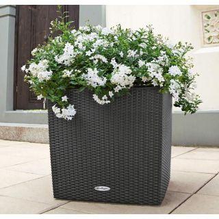 Vaso fioriera CUBE COTTAGE 50x50 H50 con auto irrigazione - LECHUZA