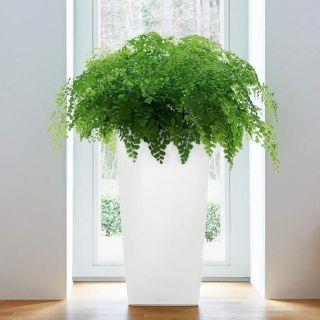 Vaso da tavolo CUBICO PREMIUM 22x22 H41 con auto irrigazione - LECHUZA