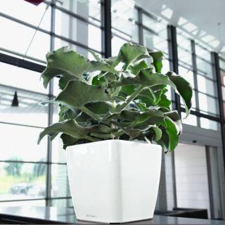 Vaso per piante QUADRO PREMIUM 35x35 LS con auto irrigazione - LECHUZA