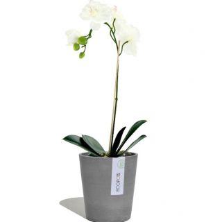 Vaso Orchidea MORINDA Ø14 H16 - ECOPOTS