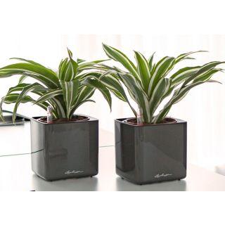 Vaso da tavolo CUBE GLOSSY con auto irrigazione 16X16 H16 - LECHUZA