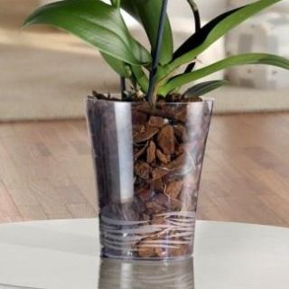 Vaso trasparente ORCHIDEA Ø16 - TERAPLAST