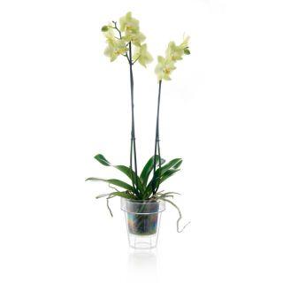 Vaso trasparente per orchidee PORTO Ø14 - TERAPLAST