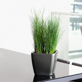 Vaso da tavolo QUADRO PREMIUM 21x21 LS con auto irrigazione - LECHUZA