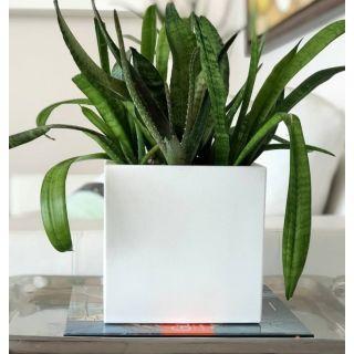 Vaso da tavolo in resina SCHIO CUBO 25x25  - TERAPLAST