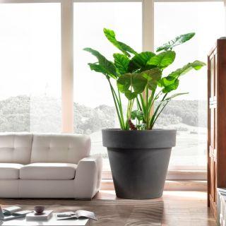 Vaso fioriera in resina STANDARD ONE Ø70 H63 - TERAPLAST