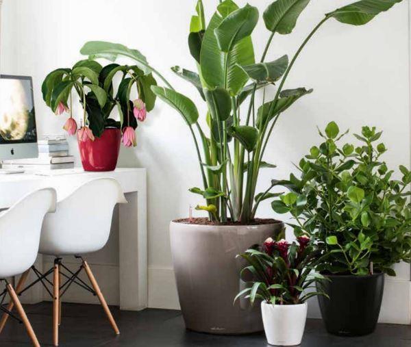 8 cose da fare per superare l'inverno e avere piante più forti e sane!
