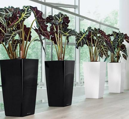 Interior Design: come arredare la casa con i vasi