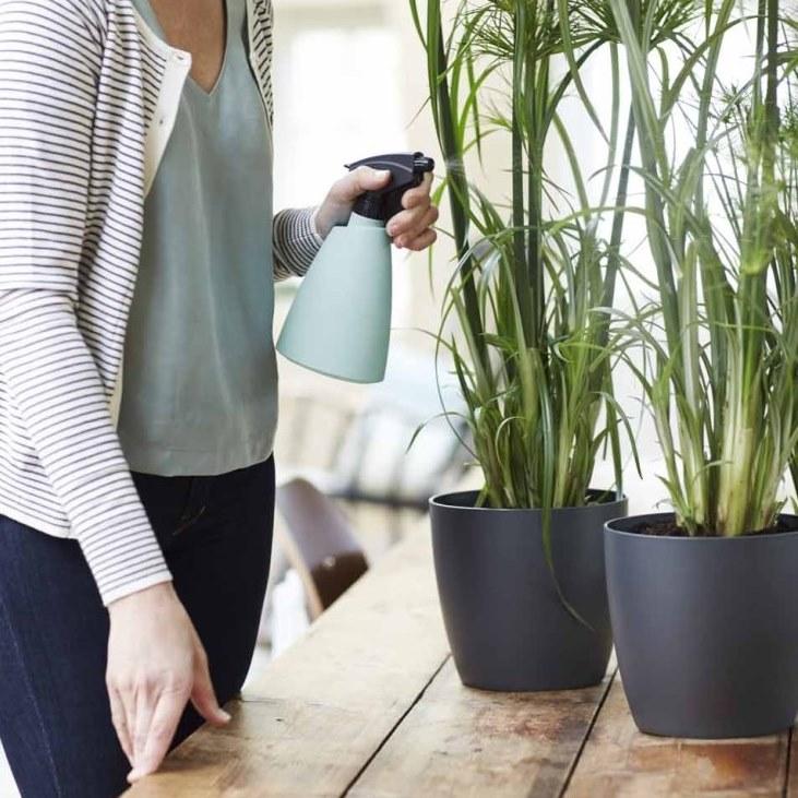Come proteggere le piante d'inverno