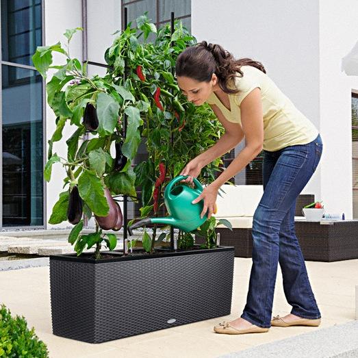 Vasi per piante rampicanti