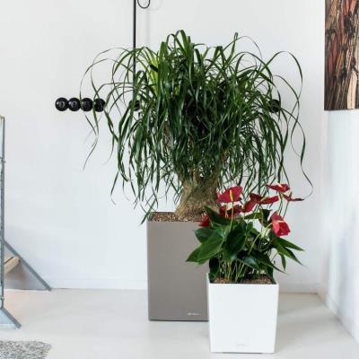 Vasi per piante d'appartamento
